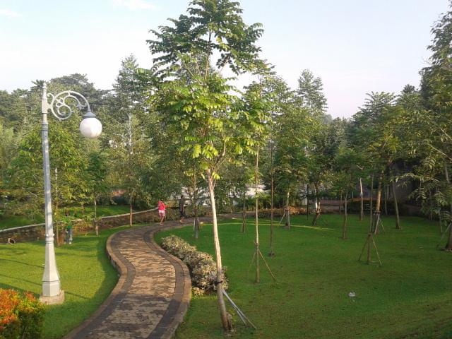 Pohon-pohon Spathodea itu.